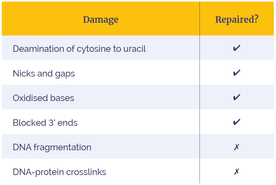 Table 1: The SureSeq FFPE DNA Repair Mix is capable of removing a variety of DNA damage caused by fixation and long-term storage. Image