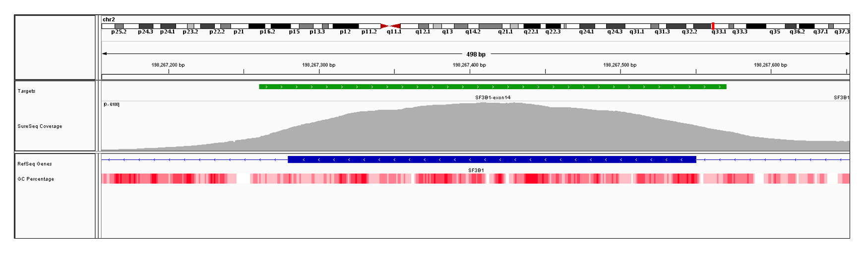 SF3B1 Exon 14 (hg19 chr2:198267280-198267550). Depth of coverage per base (grey). Targeted region (green). Gene coding region as defined by RefSeq (blue). GC percentage (red). Image