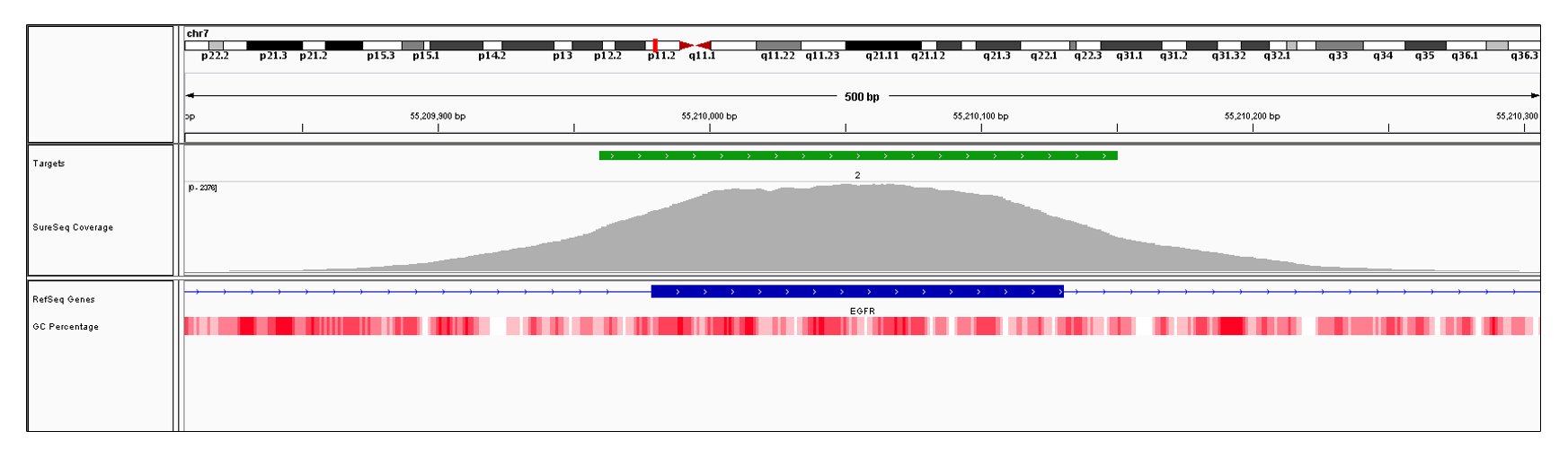 EGFR Exon 2 (hg19 chr7:55209979-55210130). Depth of coverage per base (grey). Targeted region (green). Gene coding region as defined by RefSeq (blue). GC percentage (red). Image