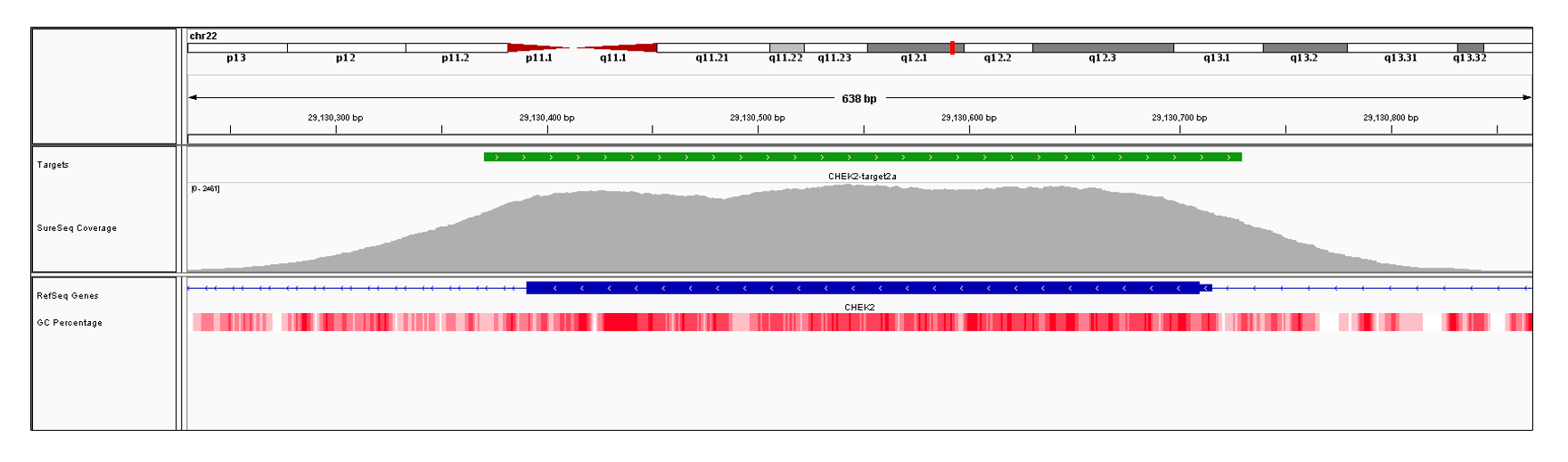 CHEK2 Exon 2 (hg19 chr22:29130391-29130715). Depth of coverage per base (grey). Targeted region (green). Gene coding region as defined by RefSeq (blue). GC percentage (red). Image