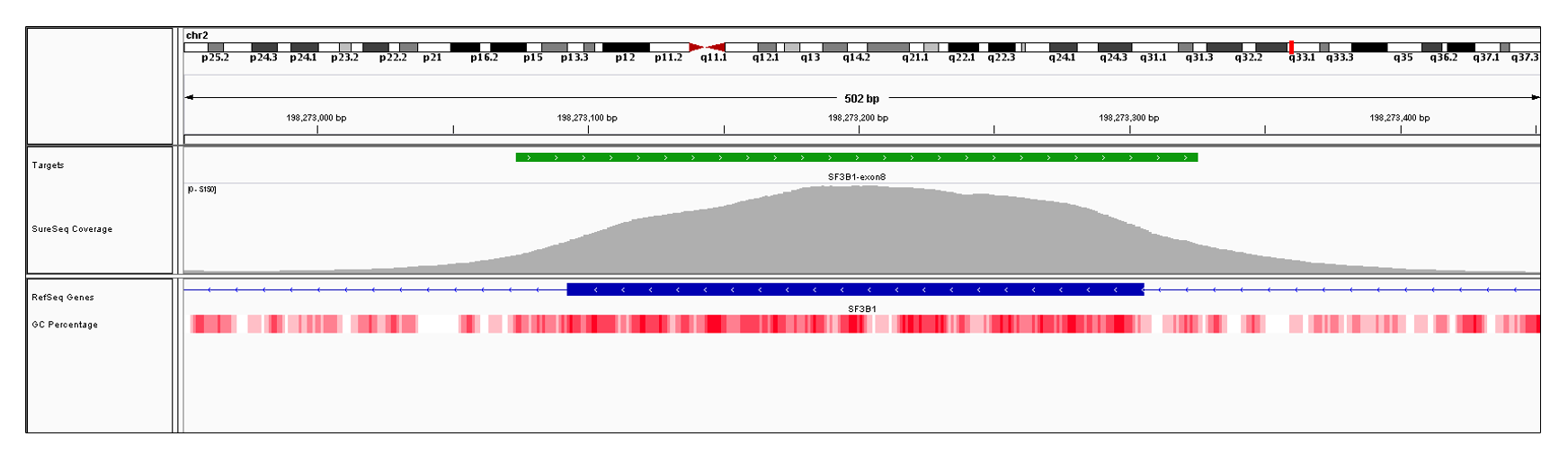 SF3B1 Exon 8 (hg19 chr2:198273093-198273305). Depth of coverage per base (grey). Targeted region (green). Gene coding region as defined by RefSeq (blue). GC percentage (red). Image