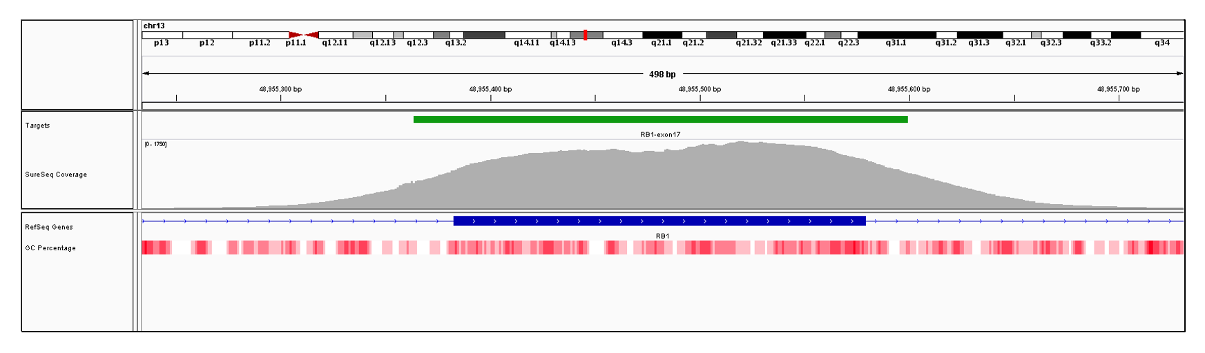 RB1 Exon 17 (hg19 chr13:48955383-48955579). Depth of coverage per base (grey). Targeted region (green). Gene coding region as defined by RefSeq (blue). GC percentage (red). Image