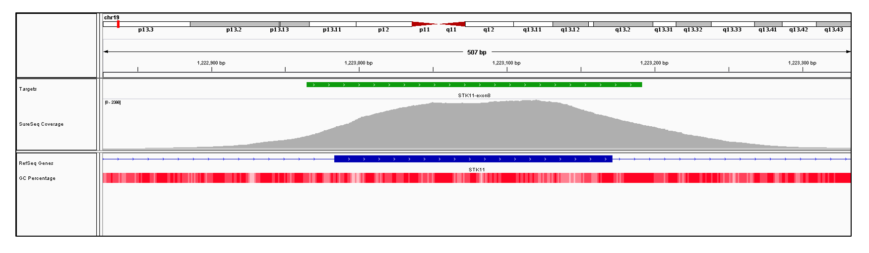 STK11 Exon 8 (hg19 chr19:1222984-1223171). Depth of coverage per base (grey). Targeted region (green). Gene coding region as defined by RefSeq (blue). GC percentage (red). Image