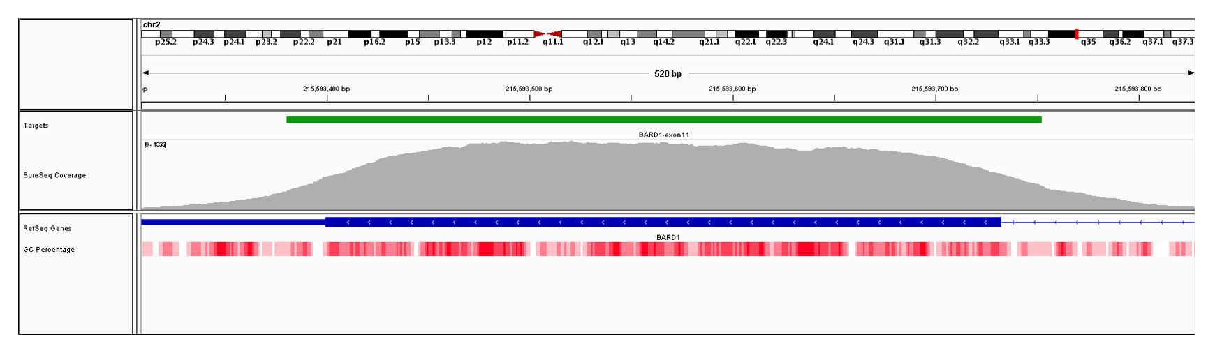 BARD1 Exon 11 (hg19 chr2:215593275-215593732). Depth of coverage per base (grey). Targeted region (green). Gene coding region as defined by RefSeq (blue). GC percentage (red). Image