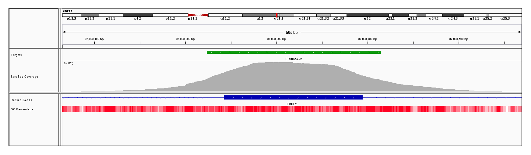 ERBB2 Exon 2 (hg19 chr17:37863243-37863394). Depth of coverage per base (grey). Targeted region (green). Gene coding region as defined by RefSeq (blue). GC percentage (red). Image