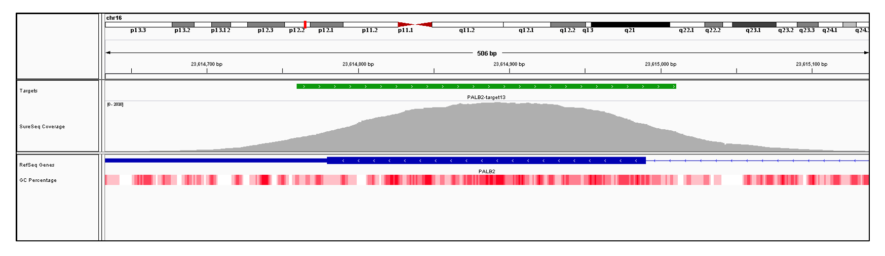 PALB2 Exon 13 (hg19 chr16:23614483-23614990). Depth of coverage per base (grey). Targeted region (green). Gene coding region as defined by RefSeq (blue). GC percentage (red). Image