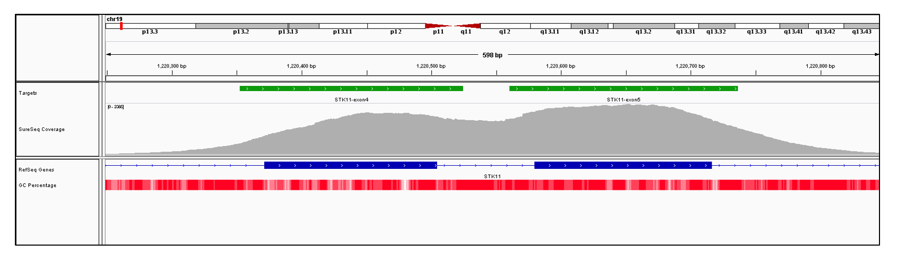 STK11 Exons 4 (hg19 chr19:1220372-1220504) and 5 (hg19 chr19:1220580-1220716). Depth of coverage per base (grey). Targeted region (green). Gene coding region as defined by RefSeq (blue). GC percentage (red). Image