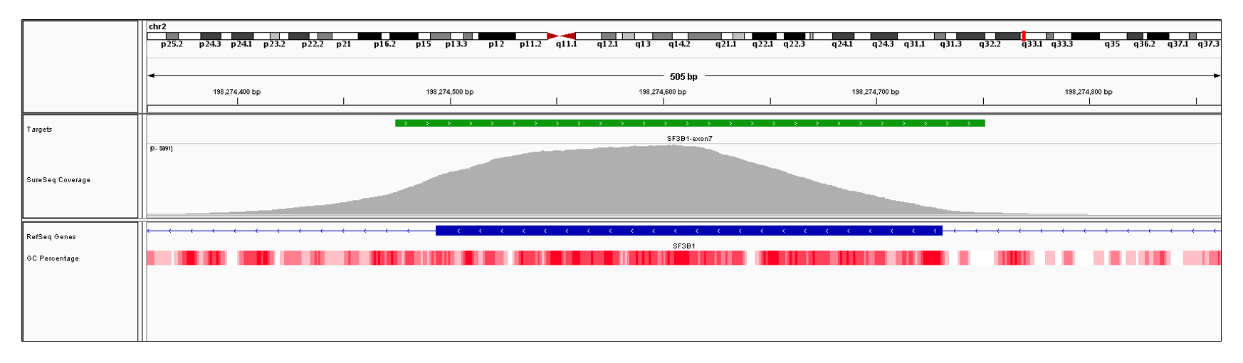 SF3B1 Exon 7 (hg19 chr2:198274494-198274731). Depth of coverage per base (grey). Targeted region (green). Gene coding region as defined by RefSeq (blue). GC percentage (red). Image
