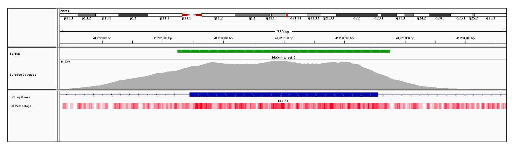 BRCA1 Exon 15 (hg19 chr17:41222945-41223255). Depth of coverage per base (grey). Targeted region (green). Gene coding region as defined by RefSeq (blue). GC percentage (red). Image