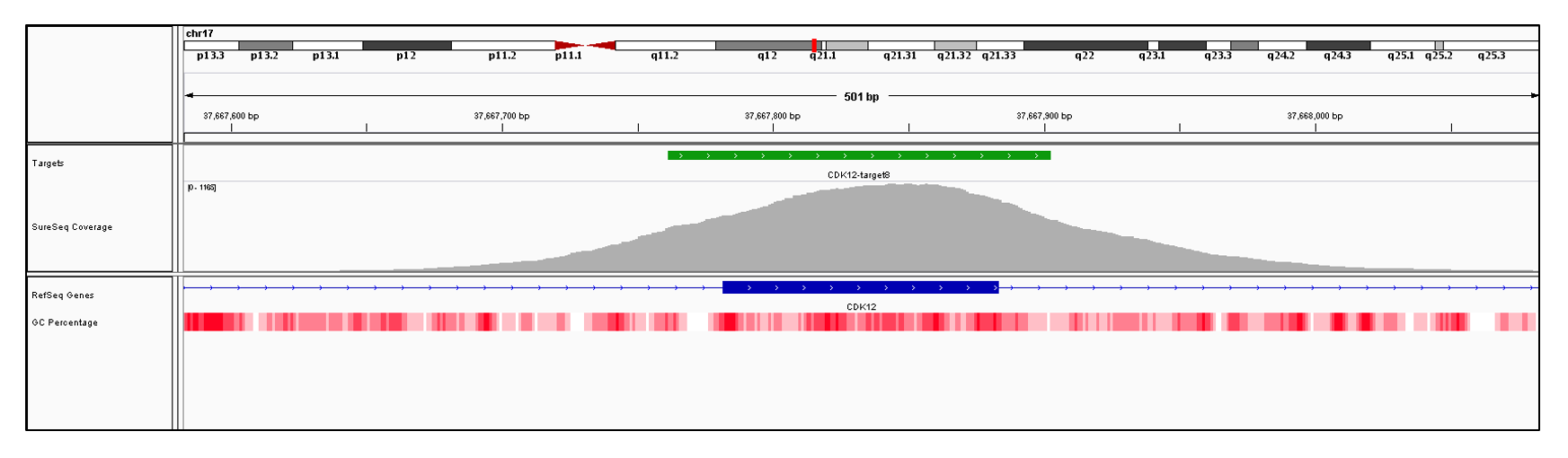 CDK12 Exon 8 (hg19 chr17:37667782-37667883). Depth of coverage per base (grey). Targeted region (green). Gene coding region as defined by RefSeq (blue). GC percentage (red). Image